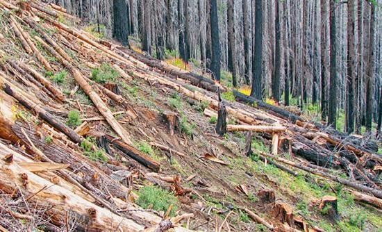 REALNEWS: Λεηλατούν δάση και λίμνες