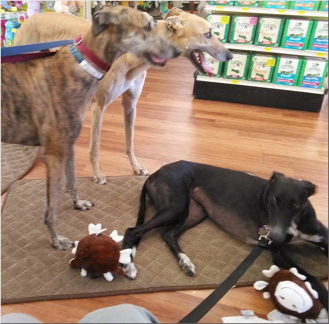 Posey, Savvy and Dusty at Pet Supermarket