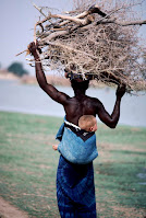 Collecting wood for a fire in Nigeria