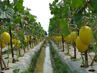 Pertanian 11 Pengertian Pertanian Menurut Para Ahli
