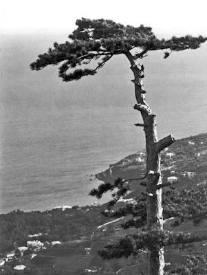 Горный пейзаж. (Близ Алупки), 1900. Фото: Василий Сокорнов