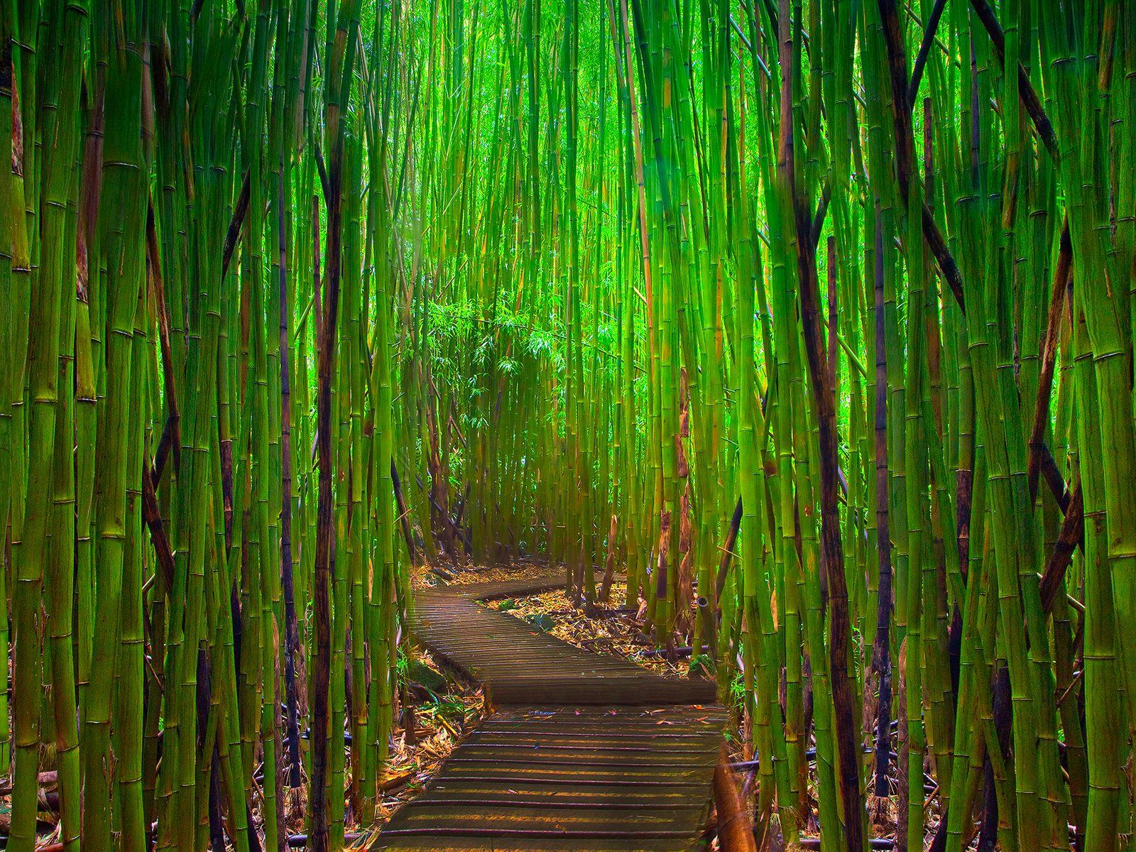 Wallpaper Proslut: High Resolution Beautiful Nature Jungle
