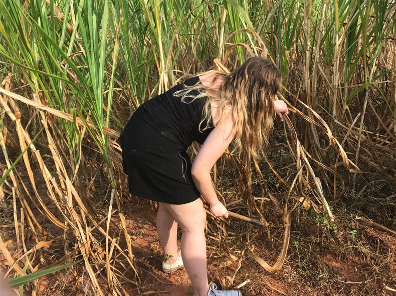 Cutting Grass in Thailand