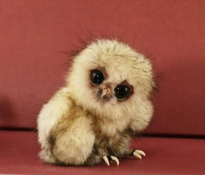 Gambar Aneh Lucu Konyol dan Unik Binatang Dari Seluruh Dunia
