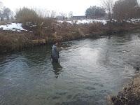 rainbow trout flyfishing