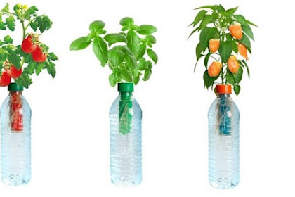 Kumpulan Tips Berkebun Hidroponik Secara Sederhana