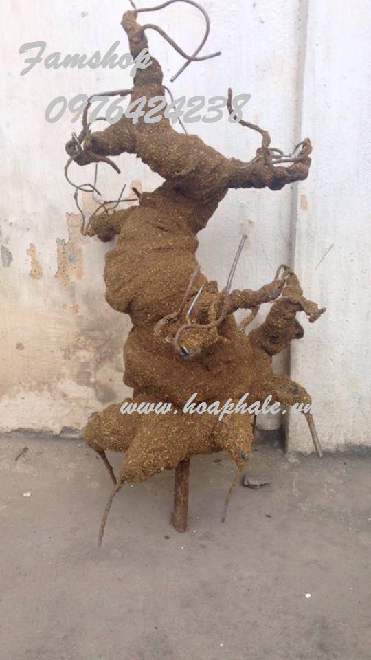 Goc bonsai mai dao tai Cao Dat