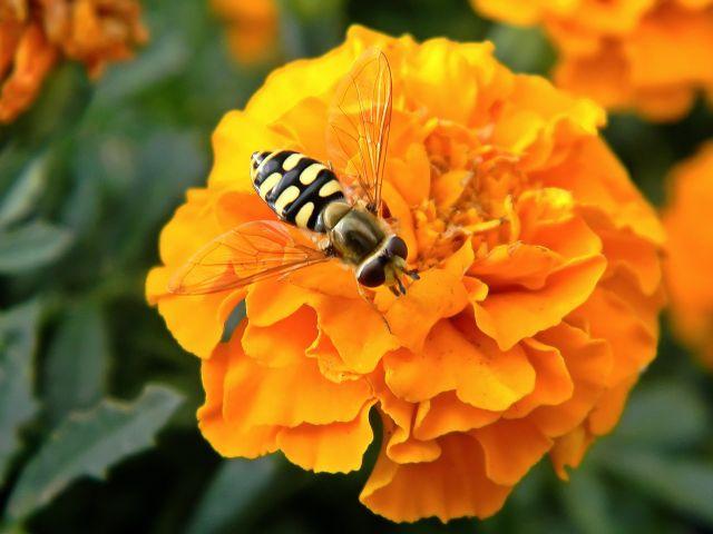 kwiaty, owady, ogród, działka