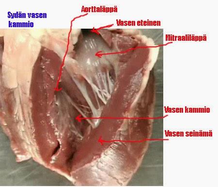 Sydänlihas
