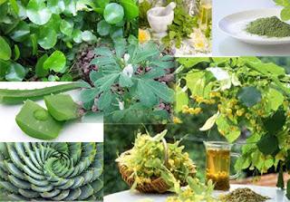 Nổi mề đay chữa bằng thảo dược tự nhiên