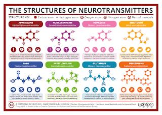 struktur dan efek neurotransmitter