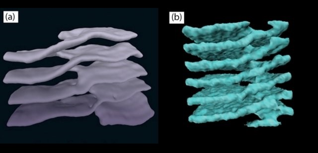 Similar shapes — structures consisting of stacked sheets connected by helical ramps — have been found in cell cytoplasm (left) and neutron stars (right). Credit: ucsb.edu