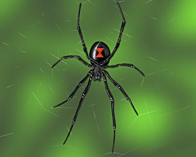 Black Widow Spider Latrodectus Pets Cute And Docile
