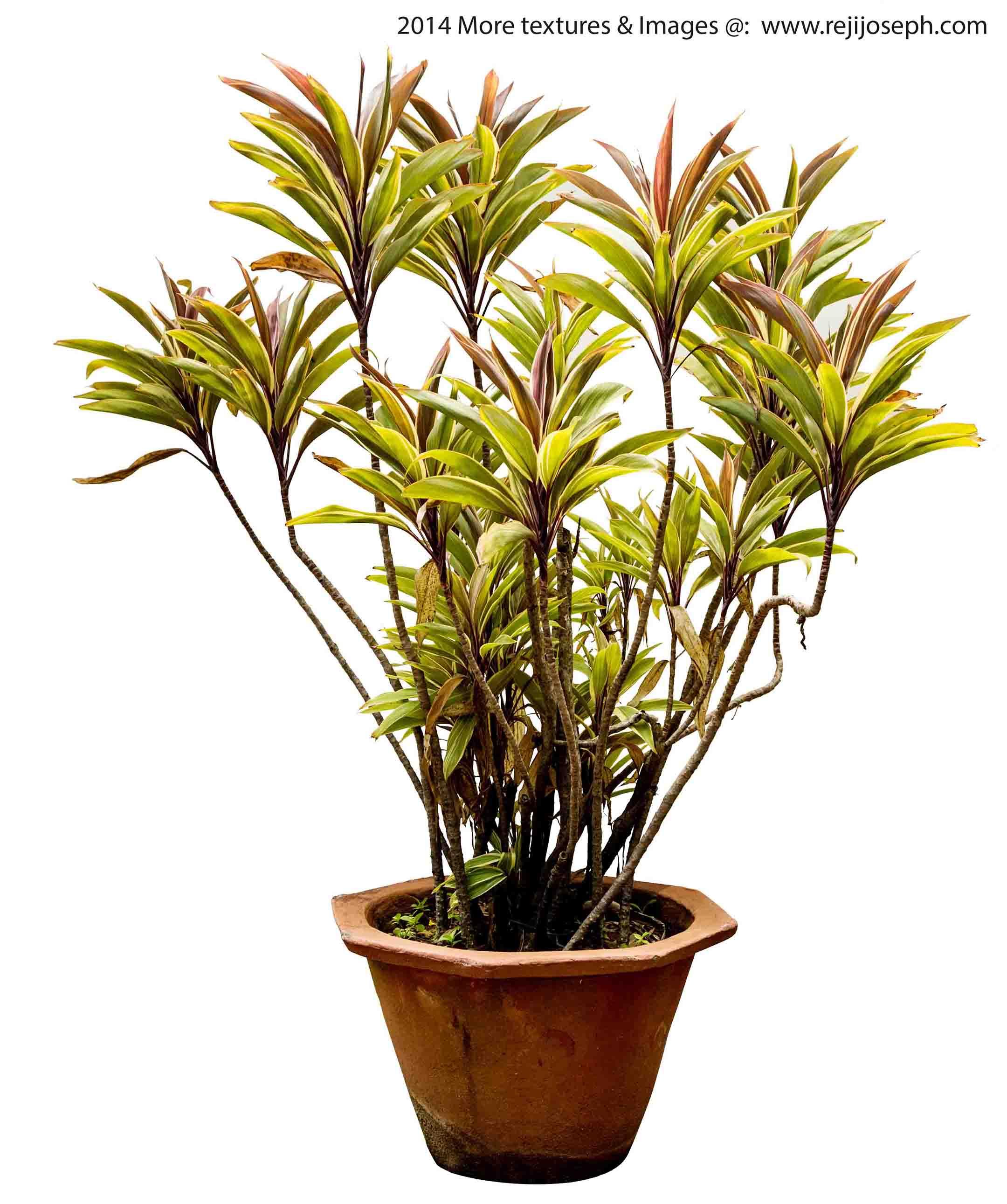 Garden Plant texture 00009