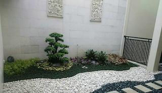Taman kering dengan bonsai dolar