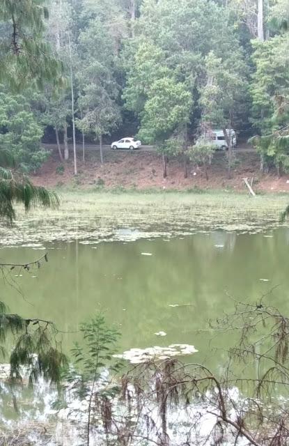 Berijam lake is i of the nigh famous reservoir inward Kodaikanal Place to visit in India: Greenish thought of berijam Lake inward kodaikanal