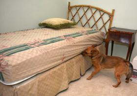 Bed Bug dog atlanta,bed bug dog,savannah, k9 bed bugs atlanta, bed bugs k9 savannah,
