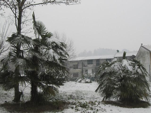 Palme Cinesi sotto la Neve