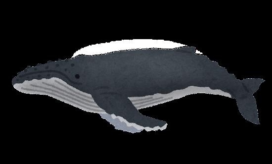 ザトウクジラのイラスト(鯨)