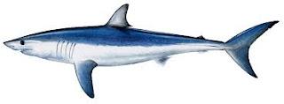 ماكو اسم السمكة الذي أطلق على Nexus 4