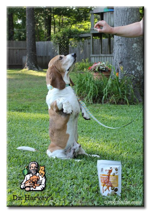 Dr. Harvey's Power Pops make Bentley sit up and take notice!