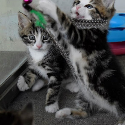 Cats Protection's Bridgend Adoption Centre kitten watch