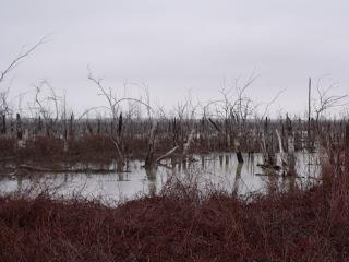 North Texas Duck Hunting/North Texas Duck Hunts/North Texas Retriever Trainers/North Texas Dog Trainers