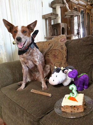 Dog with birthday cake and number candle