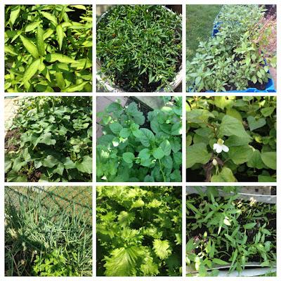 Vườn rau xứ người