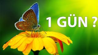 hatalı bilgiler, kelebekler 1 günden fazla yaşar