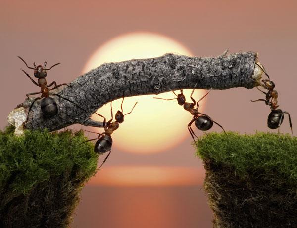 electr243nicaradical festo bionic hormigas mimic