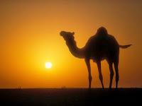 Diharapkan Kafir Quraisy sebagai Musuh Muhammad, Laki-Laki Ini Justru Beriman