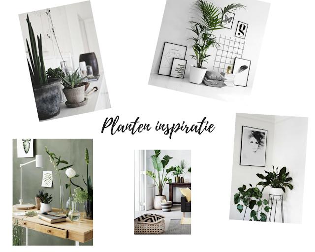 waar zet je planten neer in je kamer