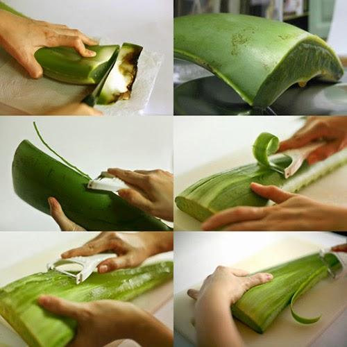 Cách lấy phần gel cây lô hội đúng cách