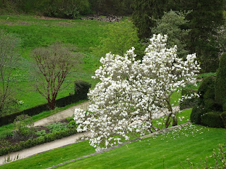 stunning spring garden with white blossom tree