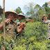Temu Lapang Panen Raya Cabai di Pekon Padang Dalom Kabupaten Lampung Barat Tahun 2016