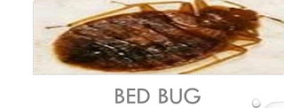 Beds bugs effects, sources and control