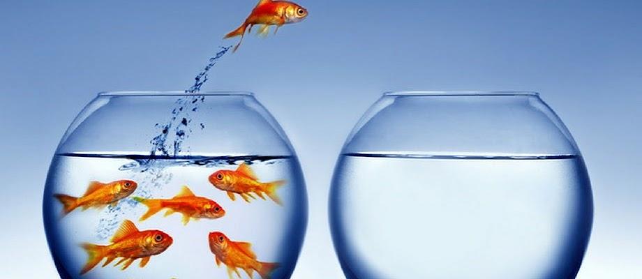 Ciri-Ciri Morfologi Ikan Mas Terlengkap