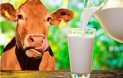 молоко в быту