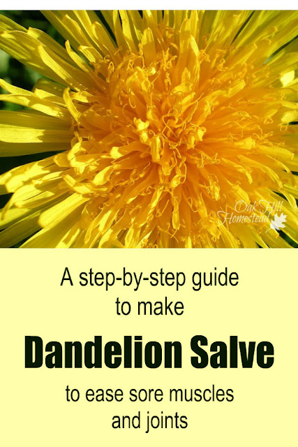 A step-by-step guide to make soothing dandelion salve.