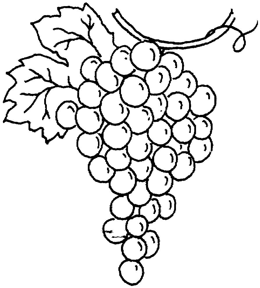 brinquedos de papel uvas imagens para colorir
