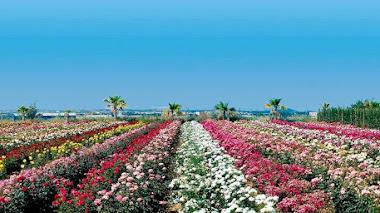 El mundo de las rosas. Taller de iniciación a su historia y cultivo