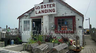 Lobster Landing Clinton Connecticut