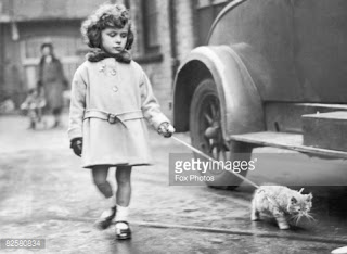 Little girl walking a cat on leash.