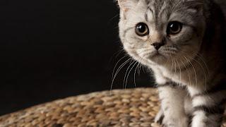gatito tierno