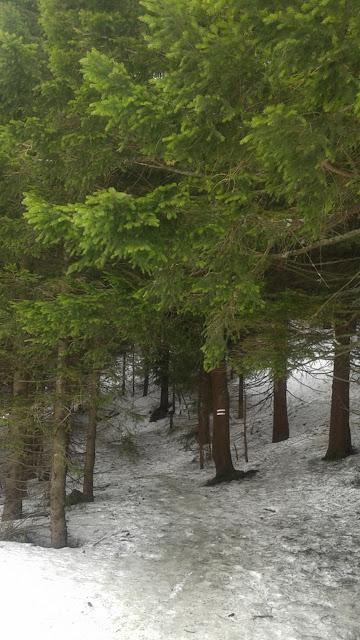 Za plecami mamy narciarzy, a przed sobą leśny szlak
