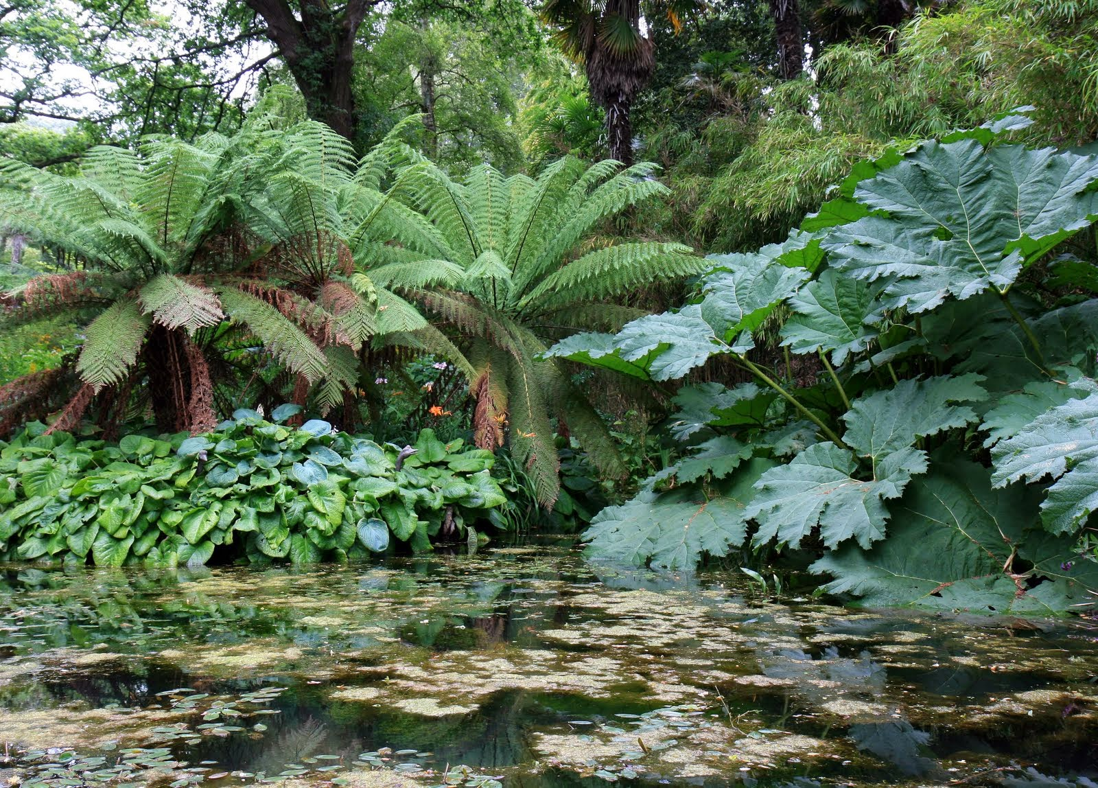 COLD HARDY PLANTS WITH GIANT LEAVES The Garden of Eaden