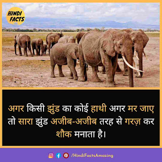 about elephant in hindi