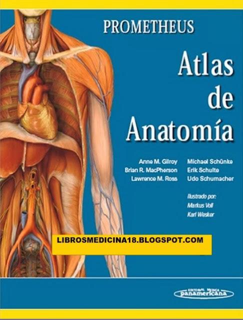 Prometheus Allgemeine Anatomie Und Bewegungssystem Pdf Download