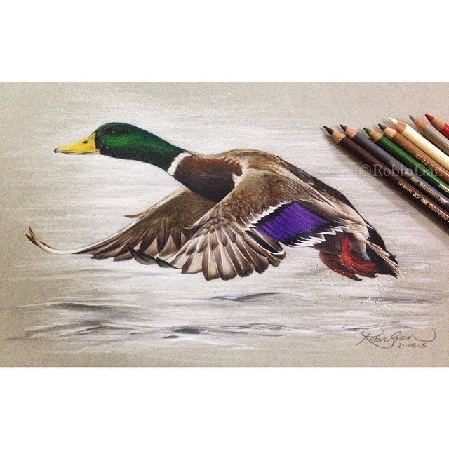 12-Mallard-Robin-Gan-Realistic-Color-Pencil-Animal-Drawings-www-designstack-co
